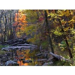 Autumn Woods Photographic Print
