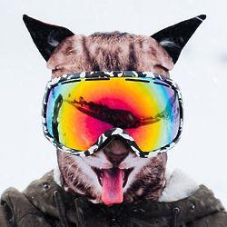 Frisky Feline Winter Snow Mask