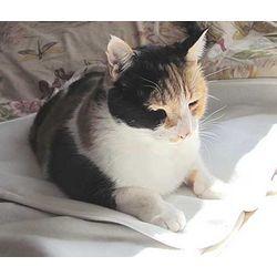 Medium Sized Therapeutic Pet Mat