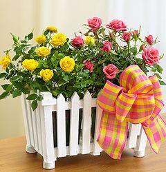 Charming Rose Garden Arrangement