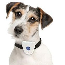 Adjustable Bark Stop Collar