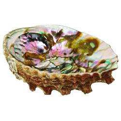 Abalone Shell Burning Herbs Accessory
