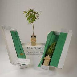 Japanese Green-Leaf Maple Condolence Tree
