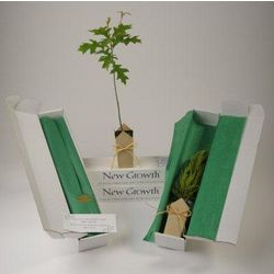 Northern Red Oak Memorial Gift Tree