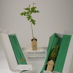 Pin Oak Tree Sympathy Gift