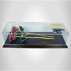 2 Gold Trimmed Roses in Museum Case