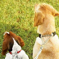 Chain Training Dog Collar