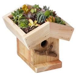 Handcrafted Living Roof Birdhouse Kit