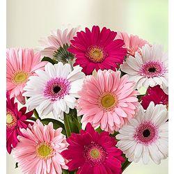 Precious Mom Daisy Bouquet and Plaque