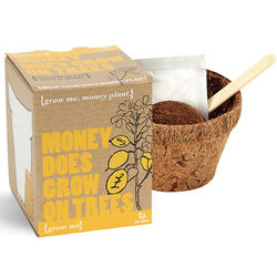 Money Does Grow on Trees Plant Kit