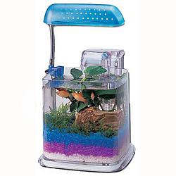 Razzle Dazzle Fish Aquarium with Light & Filter