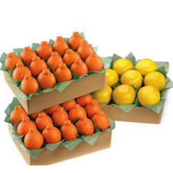 HoneyBells and Ruby Red Grapefruit in Large Family Size Box