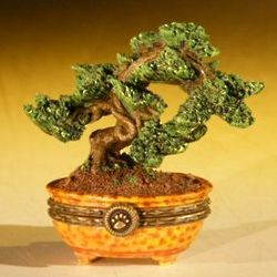 Bonsai Tree Treasure Seed Trinket Box