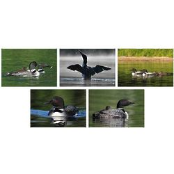 Common Loons Photo Note Cards