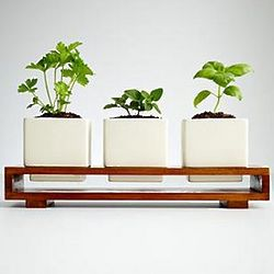 Culinary Herb Growing Kit