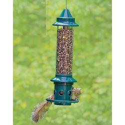 Squirrel Thwarting Bird Feeder