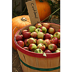 Fall Delight Photographic Print