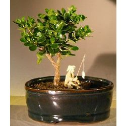 Flowering Dwarf Plum Bonsai Tree with Fisherman Figurine