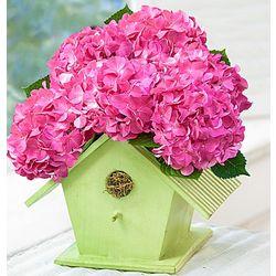 Bird House of Blooms Hydrangea Plant