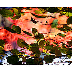 Autumn Contrasts Photographic Print