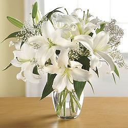 Fresh-cut Stargazer White Lily
