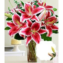 Fragrant Birthday Stargazer Lilies