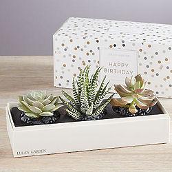 Happy Birthday Succulents