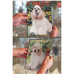 Pet Lovers Magically Changing Photo 8x10