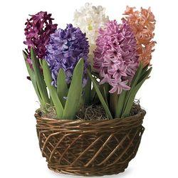 Hyacinth Pre-Planted Spring Flower Bulb Garden