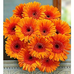 Orange Gerbera Daisies Bouquet