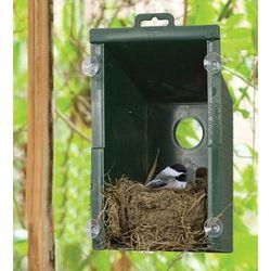 Peek a Boo Bird House