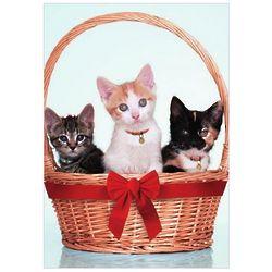 Kitten Christmas Cards Set