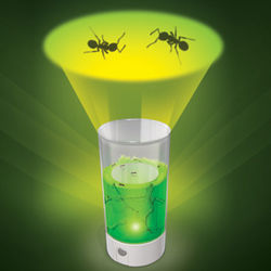 Projection Light Ant Farm