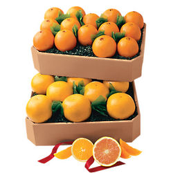 Grand Family Size Key Biscayne Oranges