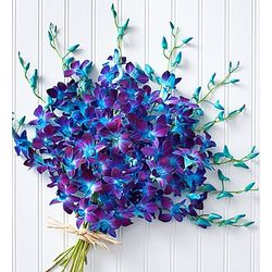 Dyed Blue Dendrobium Orchids