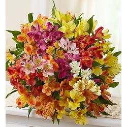 Bouquet of 50 Peruvian Lilies