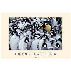Emperor Penguin Huddle Poster