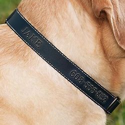 Personalized Leather Dog Collar with Name and Phone
