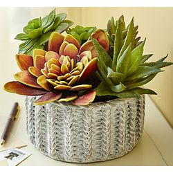 Faux Succulents in Terracotta Vase