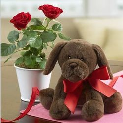 Lovable Lab with Mini Roses