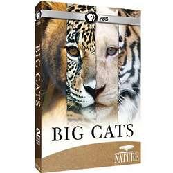 Nature Big Cats DVDs