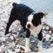 Pet Photo Mosaic