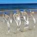 Cape Cod Style Bracelets